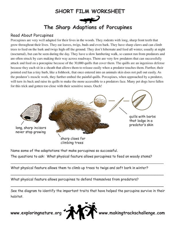 Animal Adaptation Worksheets Best Worksheet – Plant Adaptations Worksheet