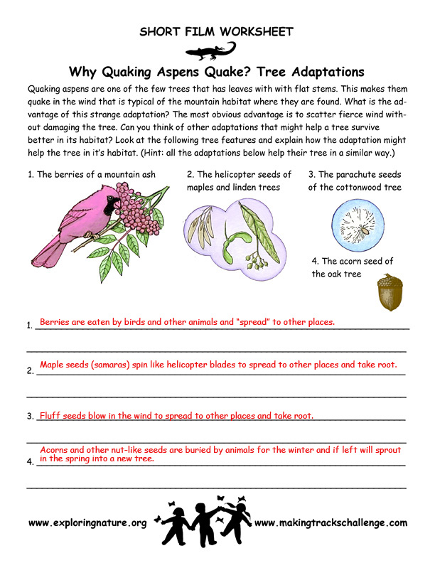 Quaking Aspen Adaptations of Trees – Adaptation Worksheet