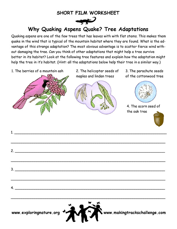 Quaking Aspen Adaptations of Trees – Plant Adaptations Worksheet