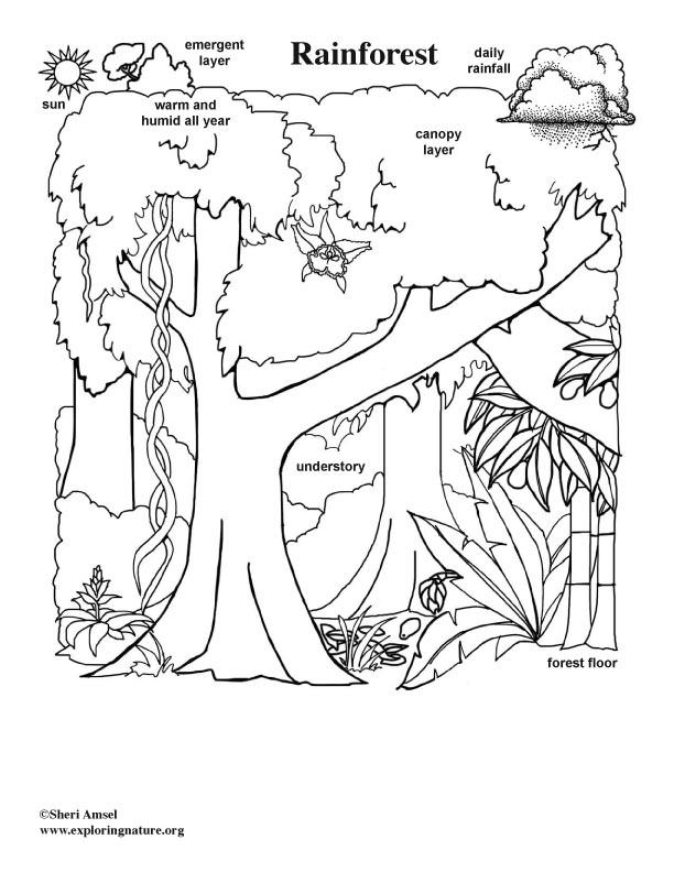 Animals in their rainforest Habitat activity