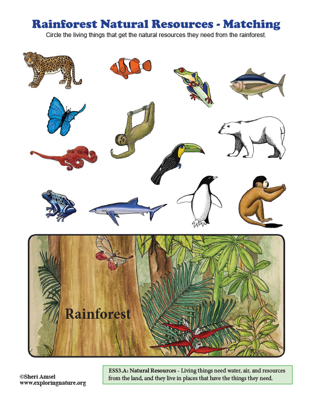 Rainforest Natural Resources - Matching