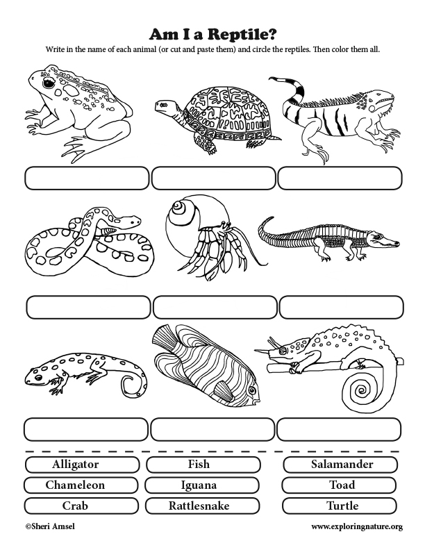 Am I a Reptile? Classification for Elementary