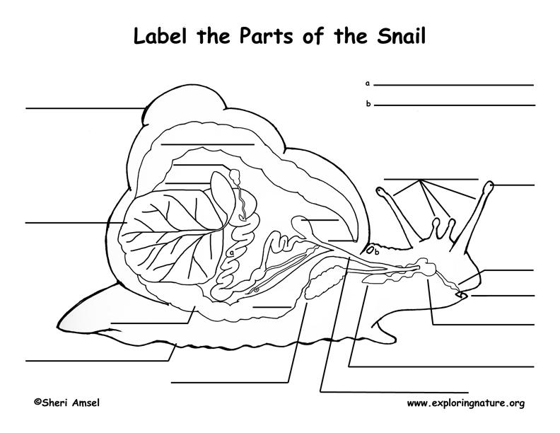 Snail Inquiry Read Observe Record