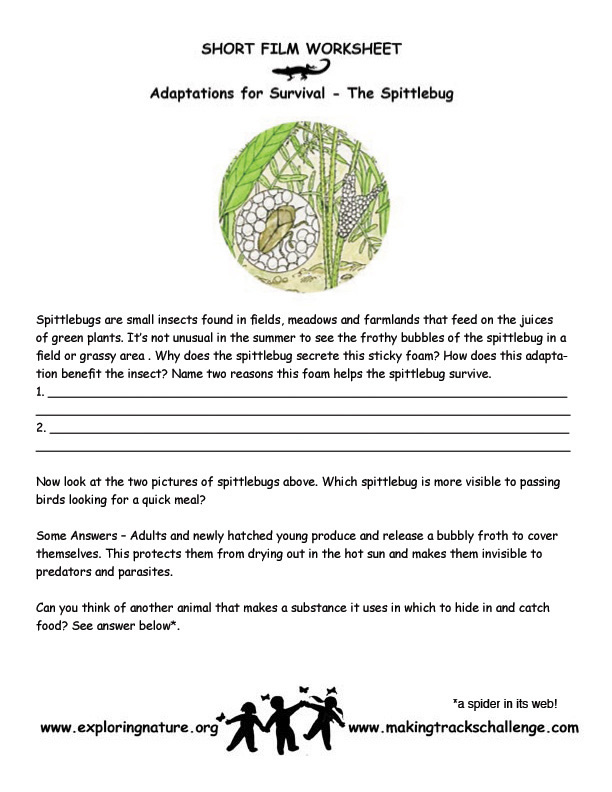 spittle bugadaptjpg – Plant Adaptations Worksheet