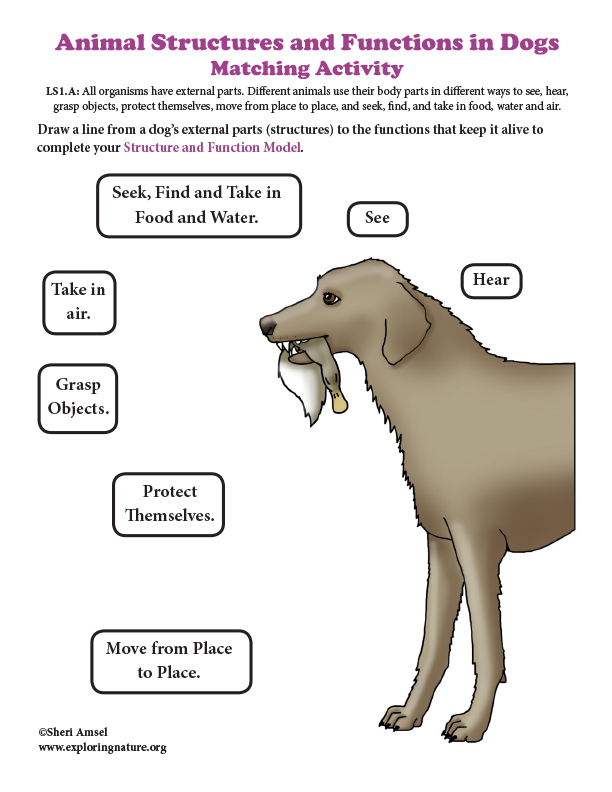Animal Structures and Functions in Dogs - Matching