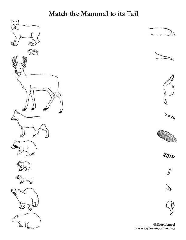 Match the Mammal to Its Tail