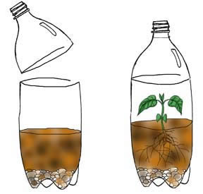Learning About Plants - Make a Terrarium