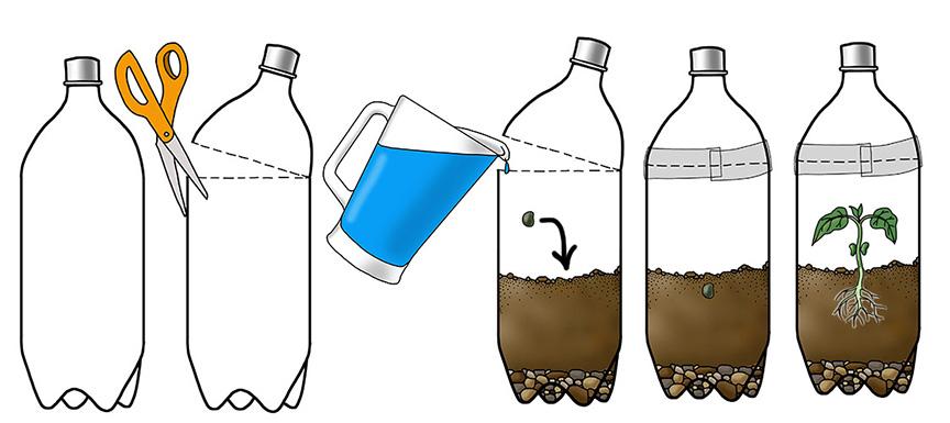 Make a Terrarium - What Plants Need Activity