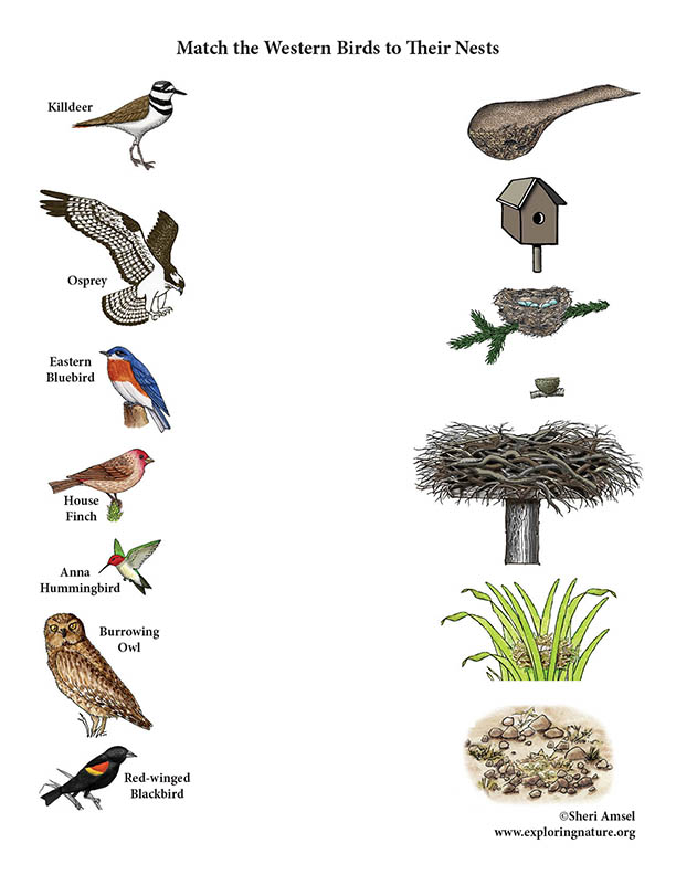 Match the Western Birds to their Nests