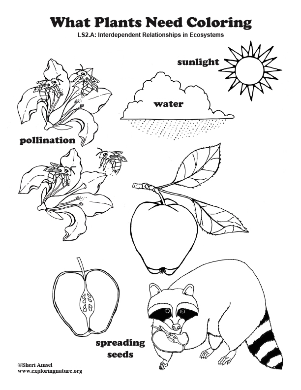 What Plants Need Coloring Page