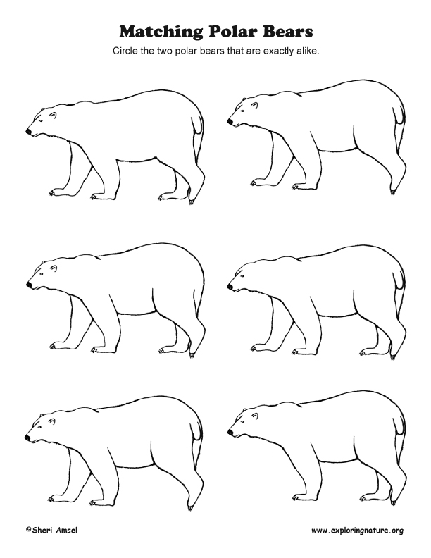 Matching Polar Bears - Observation Activity (More Challenging)
