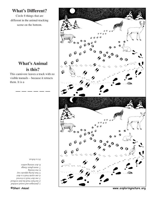 What's Different - Animal Tracking Activity -- Exploring Nature ...