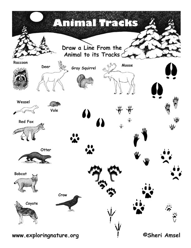 Matching Animals to Their Tracks -- Exploring Nature Educational ...