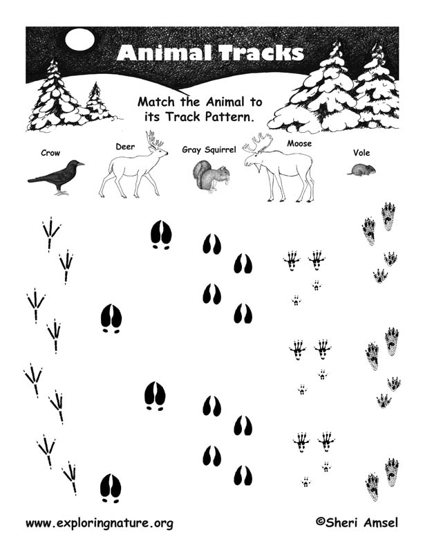 Match The Animal To Its Tracks Pattern General
