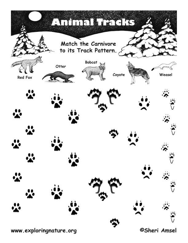 Match the Carnivore to its Tracks Pattern