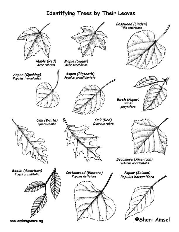 trees names and pictures pdf