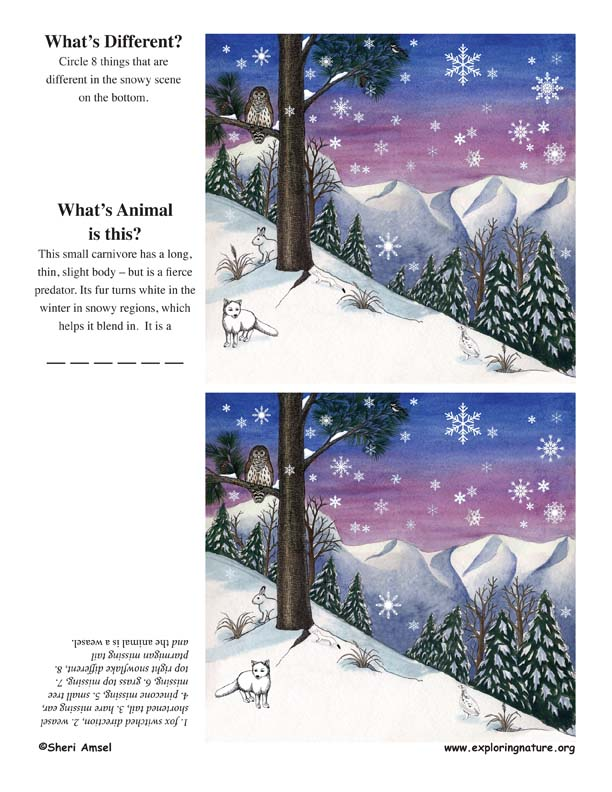 What's Different – Snow Activity
