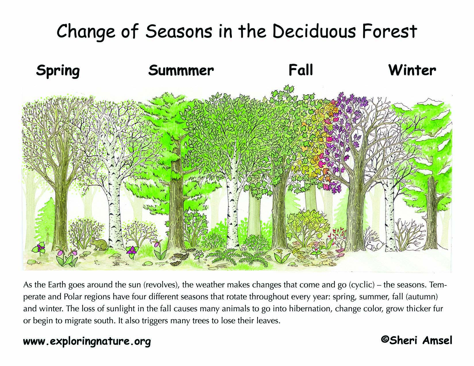 Changing Seasons The Tilted Earth