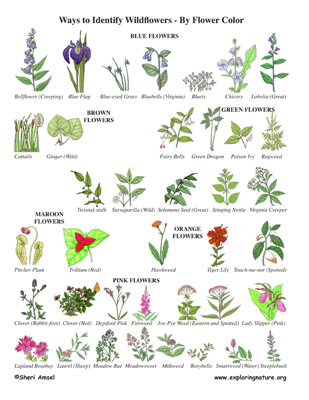 Missouri Blue Book >> Wildflower Identification by Color