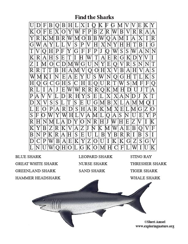 Shark Word Search (Older Readers)