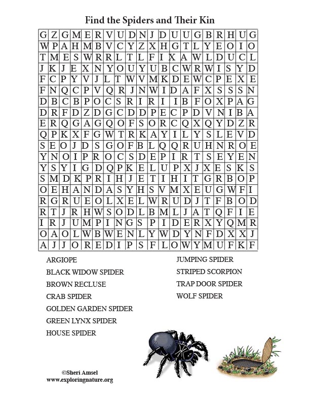 Spider Word Search (Older Readers)