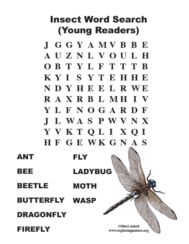 Insect Word Search  (Young Readers)