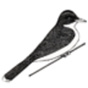 Kingbird (Eastern)