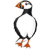 Puffin (Atlantic)