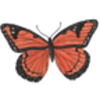 Butterfly (Viceroy)