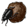 Beetle (African Dung)