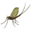 Mayfly Labeling Page