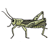 Grasshopper Labeling Page