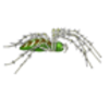 Spider (Green Lynx) Labeling Page