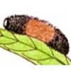 The Cool Adaptations of the Woolybear