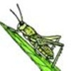 Counting Activity - Grasshopper Parts
