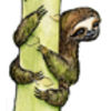 Sloth (Three-Toed)