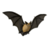 Bat (Western Long-eared Myotis)