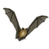 Bat (Big Brown)
