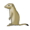 Prairie Dog (Black-tailed)