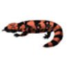 Gila Monster Drawing Lesson