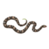Snake (Copperhead)