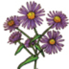 Inheritance and Variation of Traits in Flowers - Authentic Performance