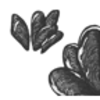 Mussel (California)