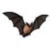 Bat (California myotis)