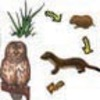 What Animals and Plants Need  to Live and Grow - Read Aloud (Kindergarten NGSS)