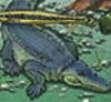 Keystone Species - American Alligator - Ecosystem Dynamics, Functioning, and Resilience