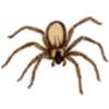Spider (Brown Recluse)