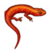 Salamander (Red Eft or Newt)