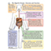 Digestive System - Structure and Function