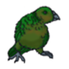 Kakapo (Night Parrot)